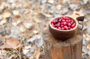 Fresh red cranberries in a wooden bowl in the autumn forest on a stump.